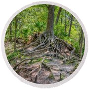 Cypress Roots Exposed Round Beach Towel
