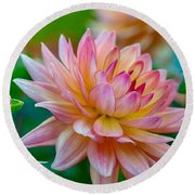 Dahlia Splendor Round Beach Towel
