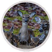 Deer Gathering Round Beach Towel