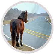 Delegats's Pride Looking For Visitors To Assateague Island Round Beach Towel