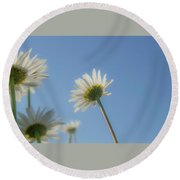 Distracted Daisies Round Beach Towel