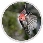 Diving Pine Grosbeak Round Beach Towel