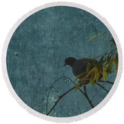 Round Beach Towel featuring the photograph Dove In Blue by Attila Meszlenyi