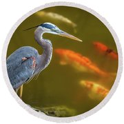 Dreaming Tricolor Heron Round Beach Towel