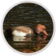 Duck On Water Round Beach Towel