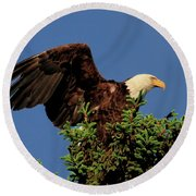 Eagle In Treetop Round Beach Towel