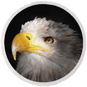 Eagle Portrait Round Beach Towel