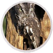 Round Beach Towel featuring the photograph Eastern Screech Owl 92515 by Rick Veldman