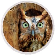 Eastern Screech Owl Perched In A Hole In A Tree Round Beach Towel