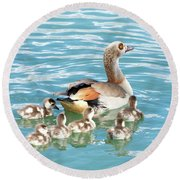 Egyptian Goose With Goslings Swimming Round Beach Towel