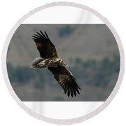 Egyptian Vulture, Sub-adult Round Beach Towel