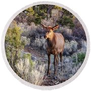 Round Beach Towel featuring the photograph Elk Cow 2, Grand Canyon by Dawn Richards