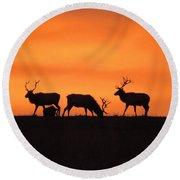 Elk In The Morning Light Round Beach Towel