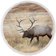 Elk In Yellowstone National Park Round Beach Towel