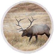 Elk In Yellowstone National Park Round Beach Towel
