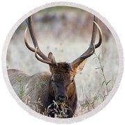 Elk Portrait Round Beach Towel