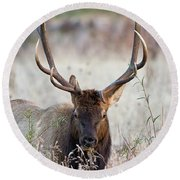 Round Beach Towel featuring the photograph Elk Portrait by Nathan Bush