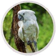 Endangered White Cockatoo Round Beach Towel