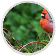 Envy - Northern Cardinal Regal Round Beach Towel