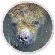 Face Of The Manatee Round Beach Towel