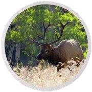 Fall Color Rocky Mountain Bull Elk Round Beach Towel
