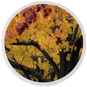 Fall In Carlyle Round Beach Towel