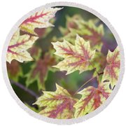 Fall Red And Yellow Leaves 10081501 Round Beach Towel