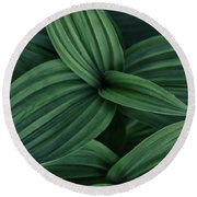 Round Beach Towel featuring the photograph False Hellebore Plant Abstract by Nathan Bush