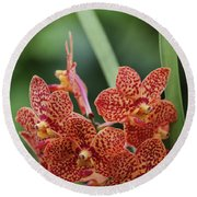 Family Of Orange Spotted Orchids Round Beach Towel