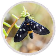 Fegea - Amata Phegea -black Insect With White Spots And Yellow Details Round Beach Towel