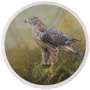 Female Goshawk Paintings Round Beach Towel