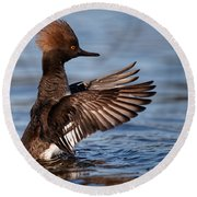 Female Merganser Wings Forward Round Beach Towel