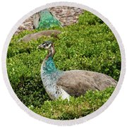 Female Peafowl At The Gardens Of Cecilio Rodriguez In Madrid, Spain Round Beach Towel