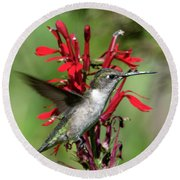 Female Ruby-throated Hummingbird Dsb0325 Round Beach Towel