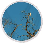 Round Beach Towel featuring the photograph Ferrunginous Hawk In Tree by Jon Burch Photography