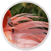 Flamingo Preening Round Beach Towel