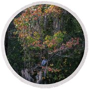 Round Beach Towel featuring the photograph Florida Heron In Red Maple by Steven Sparks