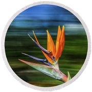 Flying Bird Of Paradise Round Beach Towel