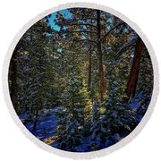 Round Beach Towel featuring the photograph Forest Shadows by Dan Miller