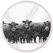 Frosty Faces Black Angus Cows Montana Round Beach Towel