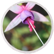 Fuchsia Showing Off In All Its Glory Round Beach Towel