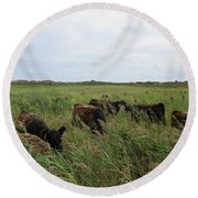 Galloway Cows On Texel North Holland Round Beach Towel