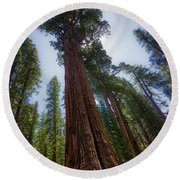 Giant Sequoia Tree Round Beach Towel