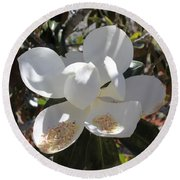 Gigantic White Magnolia Blossoms Blowing In The Wind Round Beach Towel