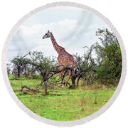 Round Beach Towel featuring the photograph Giraffe Landscape by Kay Brewer