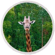 Giraffe Looking For Food During The Daytime. Round Beach Towel