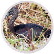 Round Beach Towel featuring the photograph Glossy Ibis 123015 by Rick Veldman