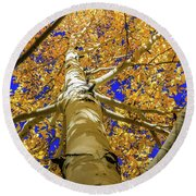 Golden Aspens In Grand Canyon Round Beach Towel