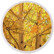 Golden Aspens In Grand Canyon, Vertical Round Beach Towel