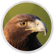 Round Beach Towel featuring the photograph Golden Eagle 5151801 by Rick Veldman